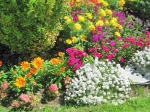 Flowers on Mackinac Island