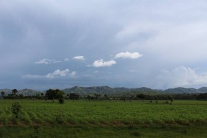 Gurku Crops