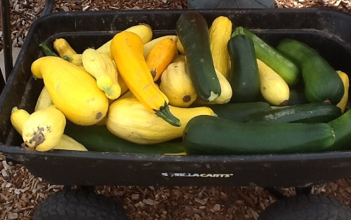 Squash harvested from the garden at  Mount Morris Church of the Brethren. Photo by Carol Erickson
